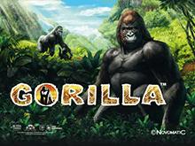 Игровые автоматы Gorilla в онлайне