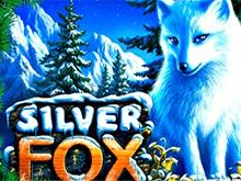 Играть на деньги в Silver Fox
