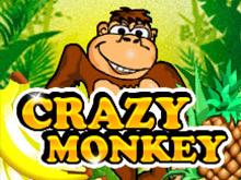 Играть на деньги в Crazy Monkey